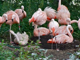 Harewood House in Yorkshire is a Bird Zoo