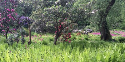 Harewood House in Yorkshire has a wild garden