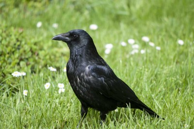 Visit Harewood House in Yorkshire to see birds