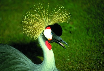 Enjoy rare birds at Harewood House in Yorkshire