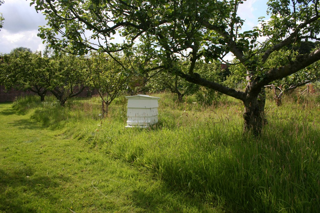 Beehives at Harewood