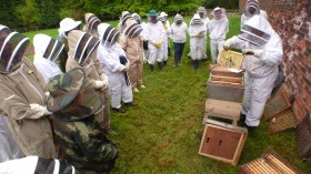 Beekeeping Taster Days at Harewood House, Yorkshire