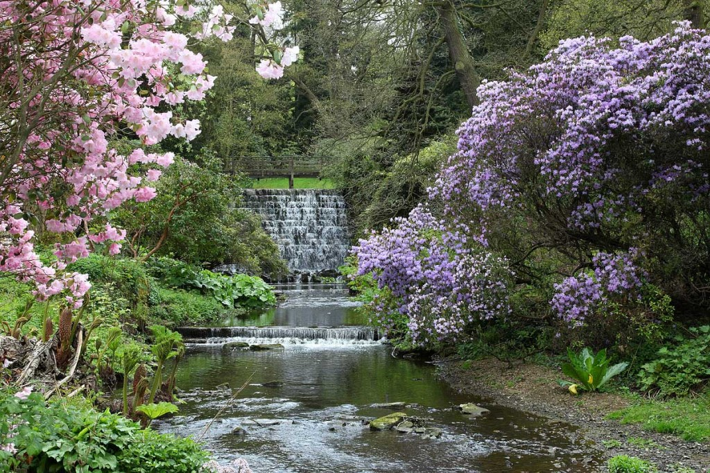 Harewood is home to a mature Himalayan Garden