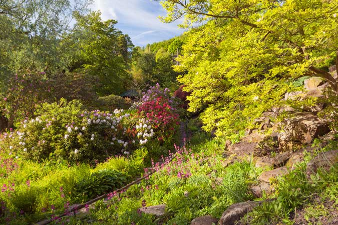 Harewood is partnered with the RHS