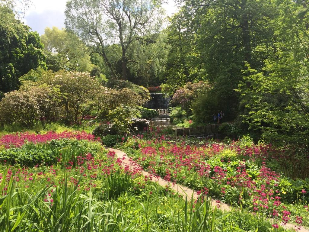 Himalayan-Garden-(May)-credit-Harewood-House-Trust-(15)