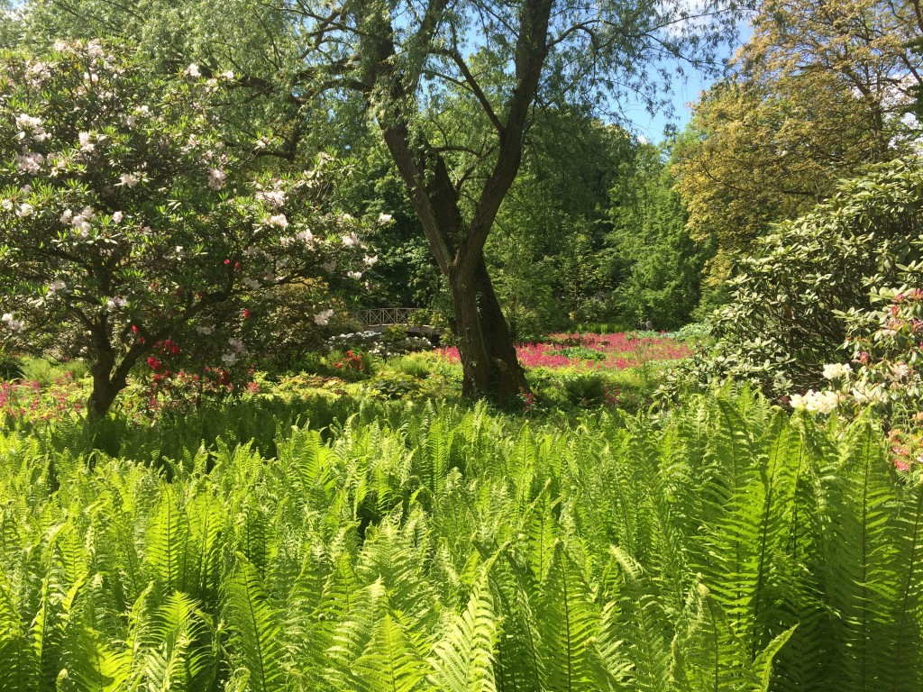 Himalayan Garden in May at Harewood House in Leeds