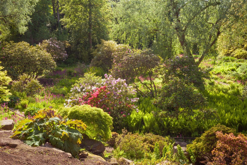 views of the Himalayan Garden at Harewood in Yorkshire