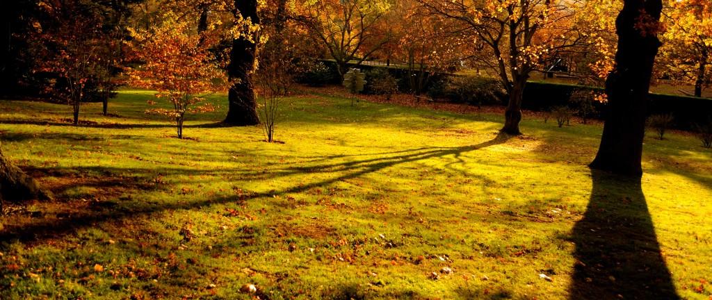 Autumn colour at Harewood House