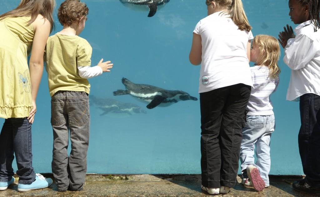 Humboldt Penguins can swim over 2m per second