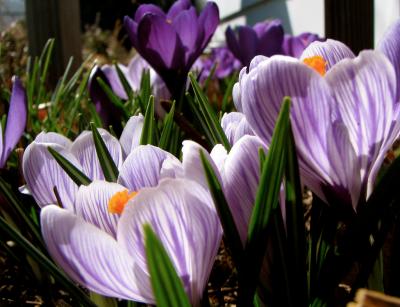 Harewood House Florist