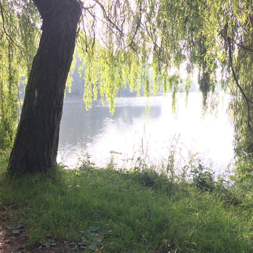 Harewood's Lake in June