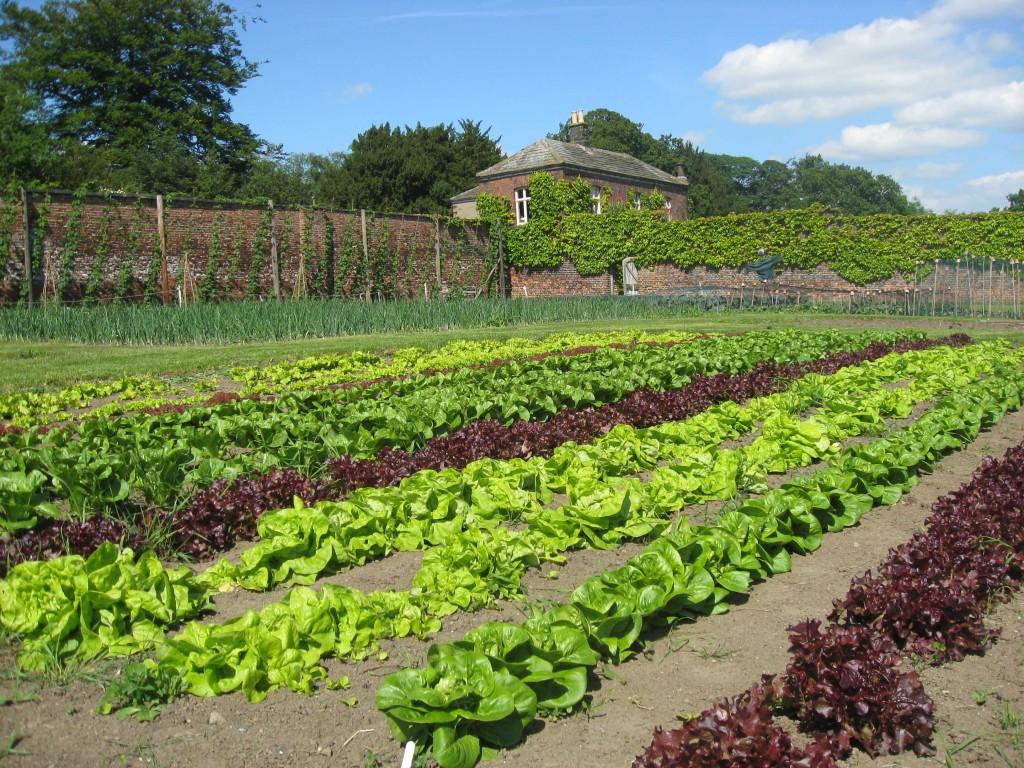 Harewood's working kitchen garden