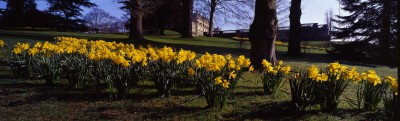 Visit Harewood's gardens and see spring flowers in the West Garden