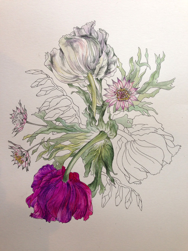 Botanical Drawing Workshop at Harewood House, Yorkshire
