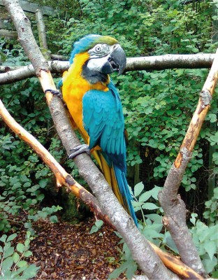 Rare birds at Harewood House in Yorkshire