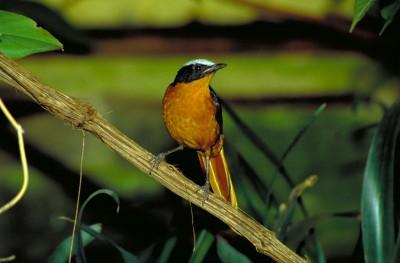 The Bird Garden at Harewood House near Harrogate has small and large bird species