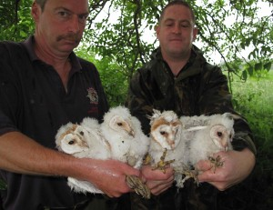 Harewood Estate in Yorkshire protects wild birds