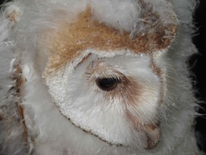 Harewood in Yorkshire has bird conservation programmes