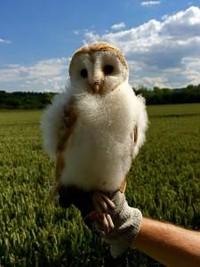 Harewood Estate protects wildlife