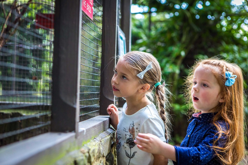 Families enjoy rare birds at Harewood House in Leeds