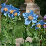 Rare plants grown in Harewood House in Yorkshire