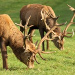 Deer Park credit Anthony Hicks and Harewood Estate (3)