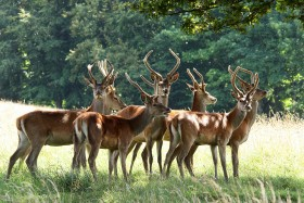 Deer Park Safari