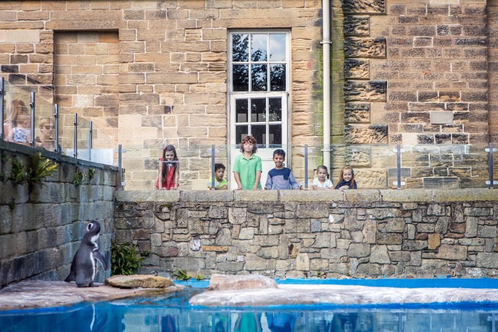 The Penguin Pool at Harewood