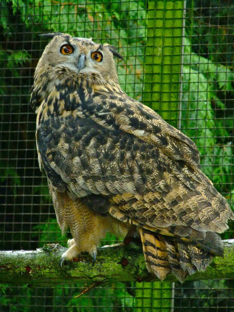 Harewood House has Owls in Yorkshire