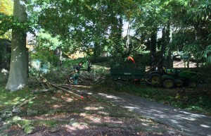 Harewood House in Leeds maintains trees