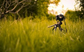 Harewood House hosts photography workshops in leeds