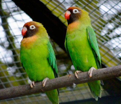 Visit Harewood in Yorkshire to see parrots
