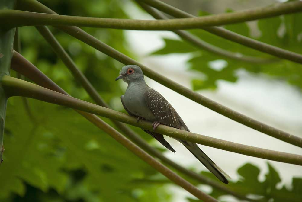 Visit Harewood House to see Diamond Doves