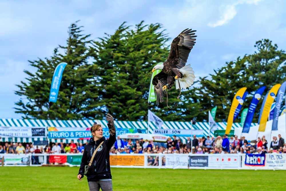 Birds of Prey display at Harewood House, Yorkshire