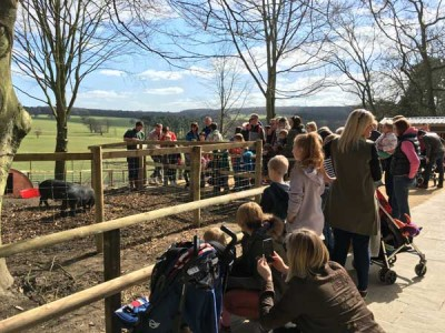 Visit Harewood Farm Experience to meet the animals