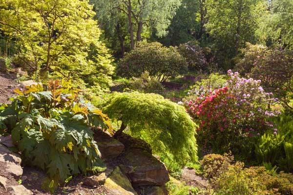 Harewood's Himalayan Garden in Yorkshire