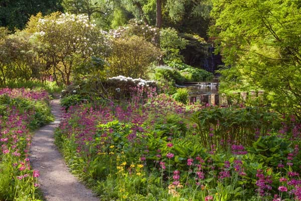 Visit Yorkshire to see spring plants in the gardens at Harewood