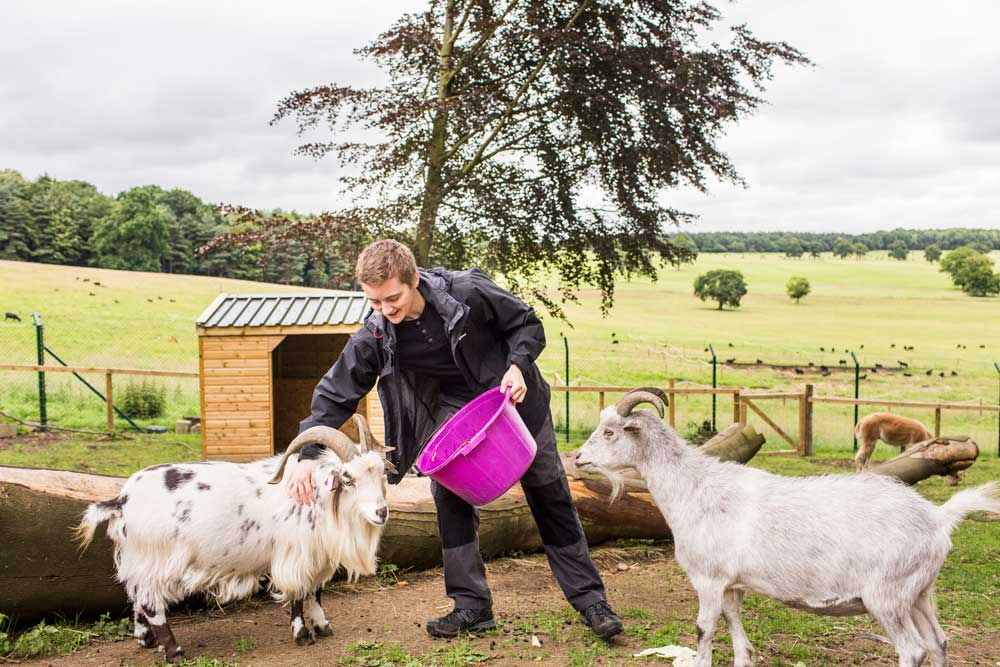 Volunteers in Yorkshire at Harewood House Farm Experience