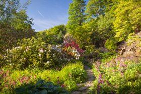 Garden Photography Workshop: The Himalayan Garden