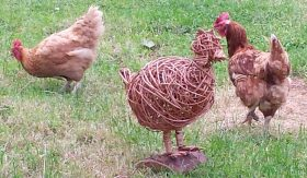 Willow Weave Chickens
