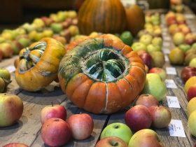 Autumn Glory: Food and Harvest