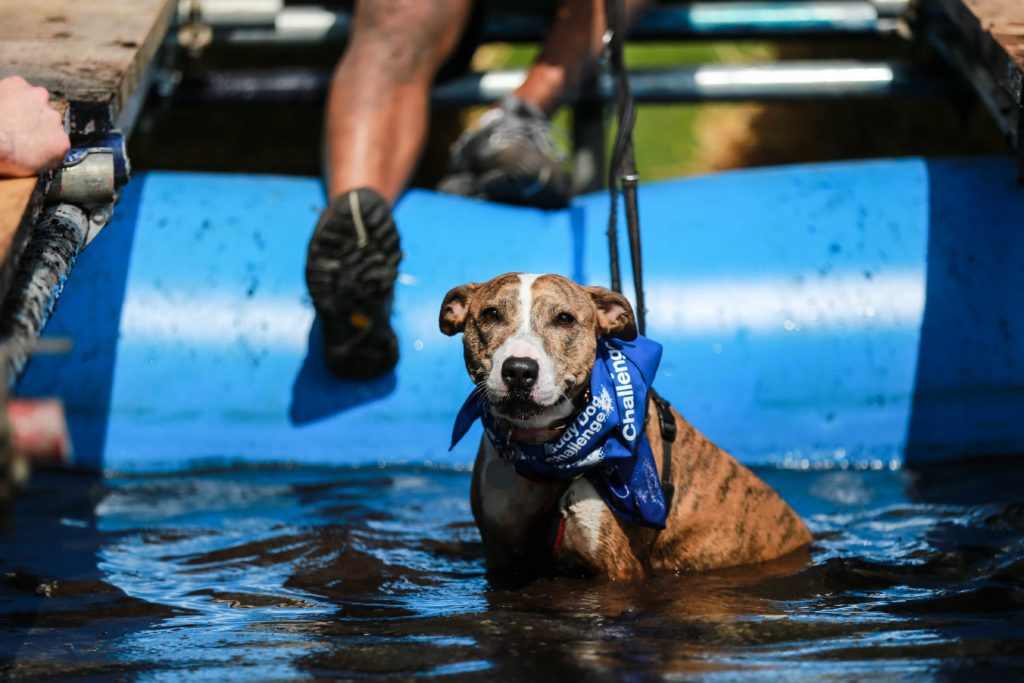 Battersea Dogs and Cats Home Muddy Dog Challenge at Harewood House, Leeds