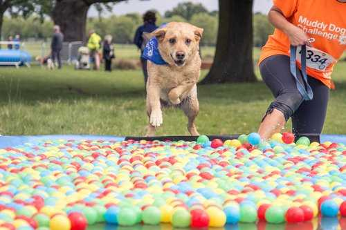 Muddy Dog Challenge fun run at Harewood, Leeds