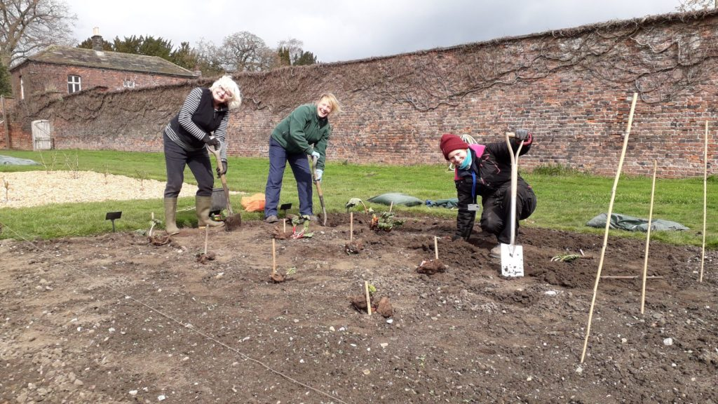 Rhubarb Planting in the Walled Garden