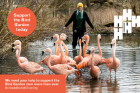 Urgent Appeal for Harewood's Bird Garden