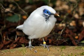 Twilight Bird Garden Tour with Head of the Bird Garden