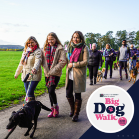 Big Dog Walk at Harewood House, Leeds