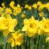 Spring at Harewood