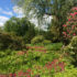 The History of the Himalayan Garden; Head Gardener Twilight Tour