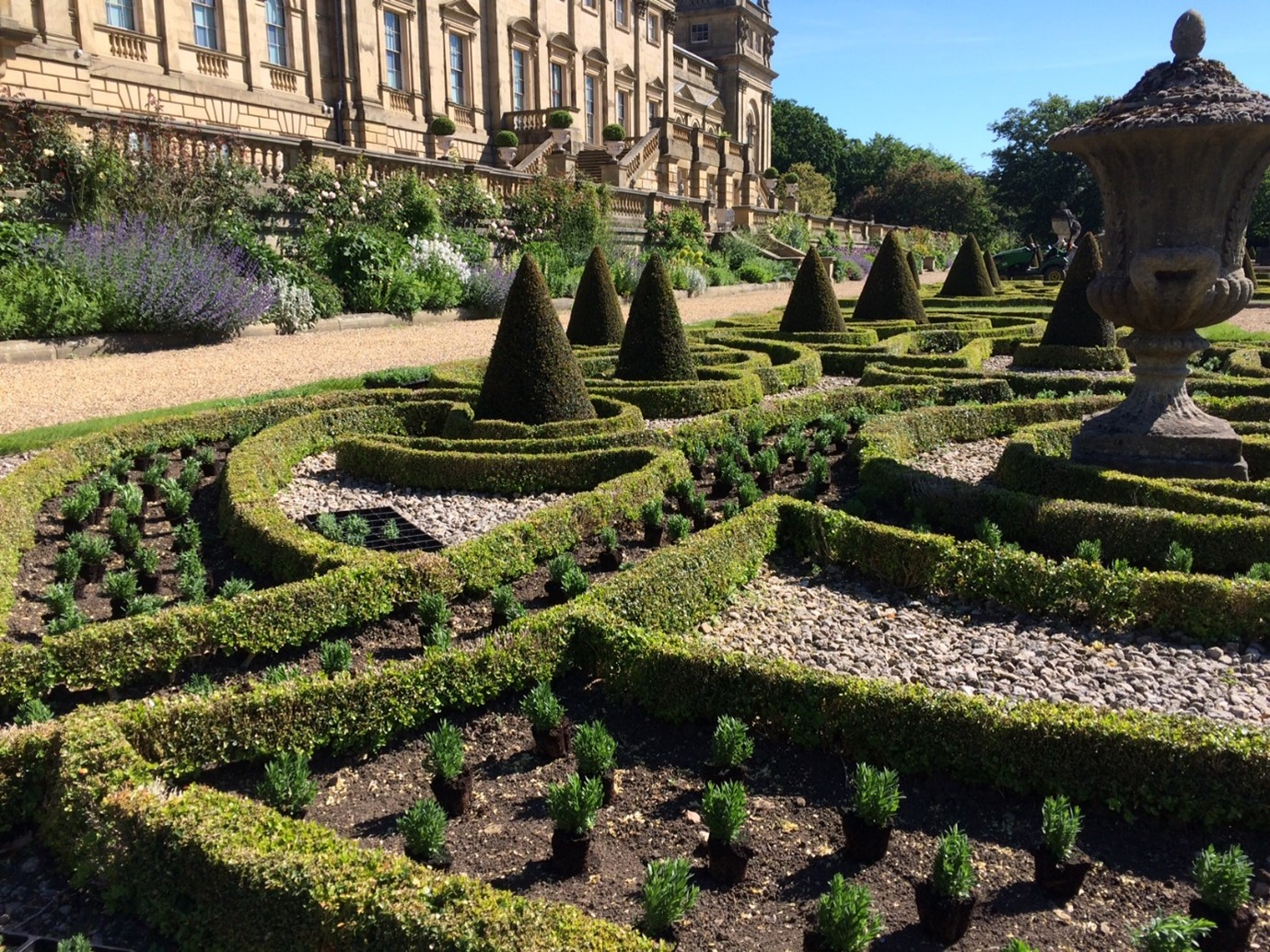 The Terrace at Harewood - hedges and planted lavender